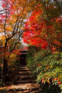 11月 紅葉の直指庵 -京都の秋-の写真素材 [FYI03161161]