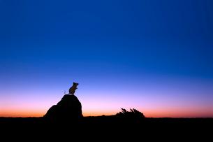 夜明けとネズミのシルエットのイラスト素材 [FYI03161373]
