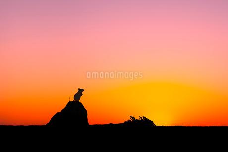 日の出とネズミのシルエットのイラスト素材 [FYI03161378]