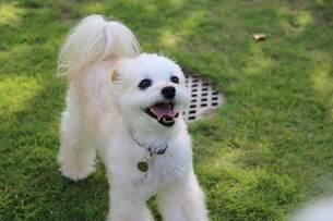 ドッグランで楽しむ犬の写真素材 [FYI03161397]