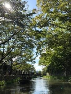 木漏れ日の小川の写真素材 [FYI03161538]