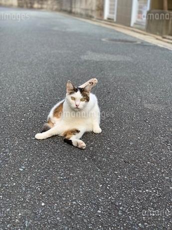 猫の写真素材 [FYI03161704]