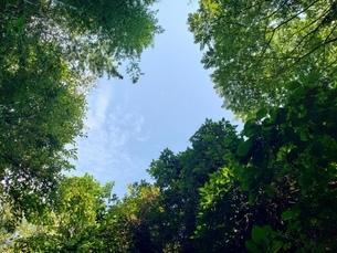 木の間から空が見えるの写真素材 [FYI03161795]