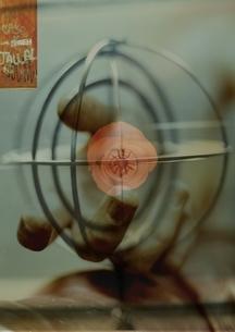 球体の中のバラを持つ手のコラージュの写真素材 [FYI03162153]