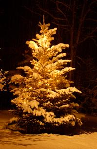 雪の積もったモミの木 白州町 山梨県の写真素材 [FYI03162194]