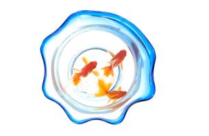 金魚鉢の中の琉金の写真素材 [FYI03162198]