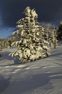 雪景色 霧氷の樅林の写真素材 [FYI03162246]