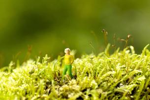 ミニチュアグリーンワールド「お散歩」の写真素材 [FYI03162260]