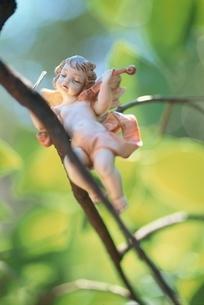 バイオリンを演奏する天使の人形の写真素材 [FYI03162282]