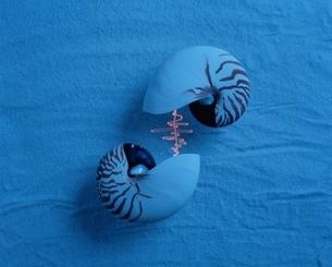 2個の貝殻と波形の光(青)の写真素材 [FYI03162358]