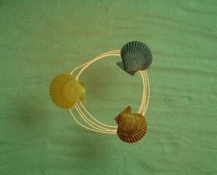 ゴウシュウヒオウギ貝の写真素材 [FYI03162370]