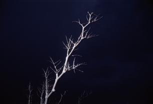 暗闇に浮かぶ1本の木の写真素材 [FYI03162377]