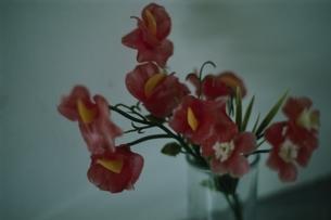 造花の写真素材 [FYI03162388]
