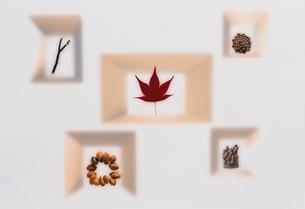 モミジや木の実の写真素材 [FYI03162426]