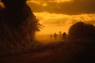 ニュージーランドの夕景(オレンジ色)の写真素材 [FYI03162538]