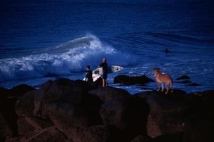 犬を連れたサーファーと海 オークランド ニュージーランドの写真素材 [FYI03162550]