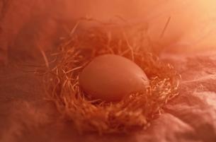 クリスマスの鳥の巣と卵の写真素材 [FYI03162640]