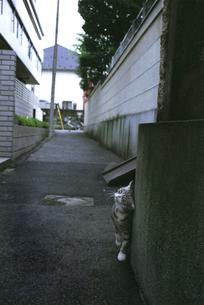 柱にすり寄る猫の写真素材 [FYI03162759]
