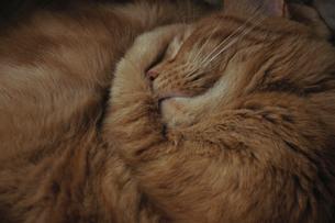 眠る猫の写真素材 [FYI03162765]