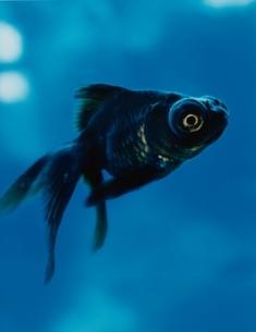 Fishの写真素材 [FYI03162803]