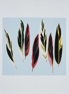 7枚の直立した葉(赤・緑・黄緑・黄色・黒)のイラスト素材 [FYI03163097]