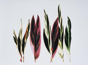 9枚の直立した葉(赤・緑・黄緑・黄色・黒)のイラスト素材 [FYI03163101]