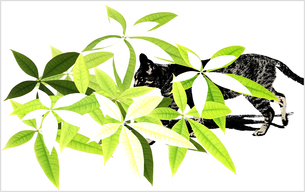 緑の葉の中を歩く猫のイラスト素材 [FYI03163135]