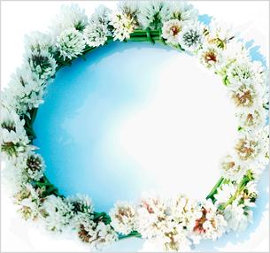 シロツメ草の花輪の写真素材 [FYI03163175]