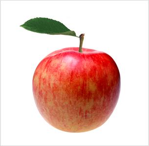 りんごの写真素材 [FYI03163182]
