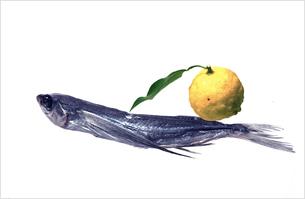 飛び魚 柚子の写真素材 [FYI03163199]