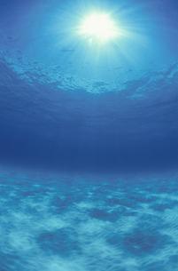 タヒチの海の中の写真素材 [FYI03163474]