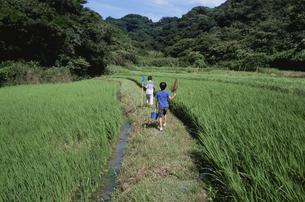 虫取り網を持って畦道を歩く少年の写真素材 [FYI03163481]