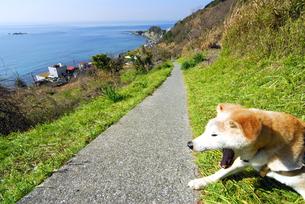 犬と山道と相模湾の海の写真素材 [FYI03163521]