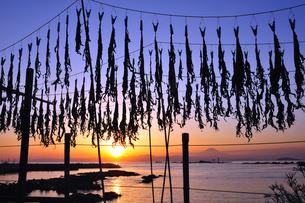 相模湾のワカメ干しと夕焼けと富士山 湘南の写真素材 [FYI03163681]