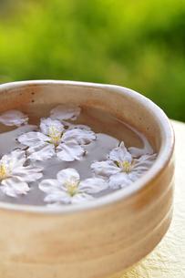 抹茶茶碗で浮かぶ桜の花びらの写真素材 [FYI03163699]