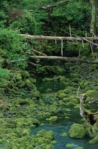 森林の中の川と丸太の橋の写真素材 [FYI03163891]
