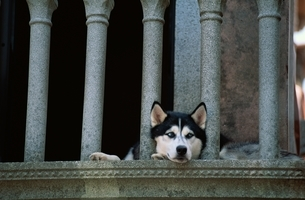 犬  ヴェネチア イタリアの写真素材 [FYI03163911]