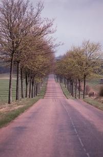 田舎の並木道 フランスの写真素材 [FYI03163912]