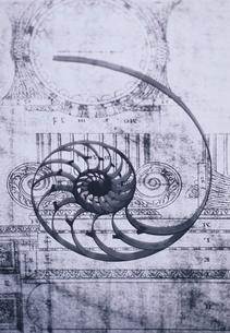 オウム貝と専門書のイメージ  B&Wの写真素材 [FYI03163927]