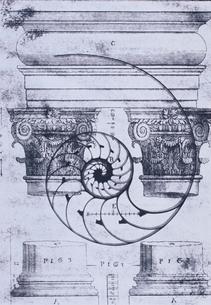 オウム貝と専門書のイメージ  B&Wの写真素材 [FYI03163931]