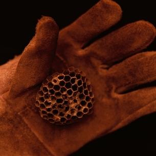 Glove&Hiveの写真素材 [FYI03163995]