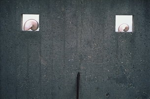 壁に飾られた2個のオウムガイの写真素材 [FYI03164010]