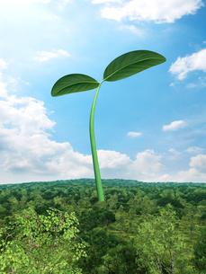 森林に巨大な新芽のイラスト素材 [FYI03165572]