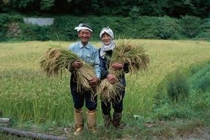 稲刈りをする日本人中高年夫婦の写真素材 [FYI03166092]