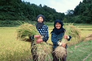 稲刈りをする2人の日本人中高年女性の写真素材 [FYI03166095]