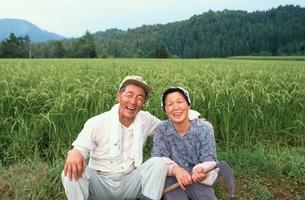 稲刈りをする日本人老夫婦の写真素材 [FYI03166101]