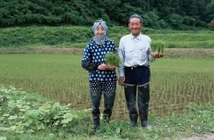 田んぼで苗を持つ日本人中高年夫婦の写真素材 [FYI03166169]