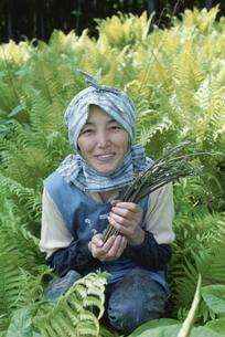 山菜収穫の写真素材 [FYI03166350]