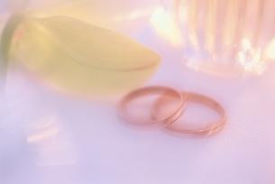 ペアの結婚指輪の写真素材 [FYI03166581]