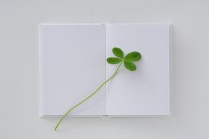 四葉のクローバーと白い本の写真素材 [FYI03166812]